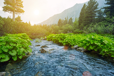 River in the mountains overlooking the High Tatras. Slovakia Europe. Evening by the river in the forest in the mountains.