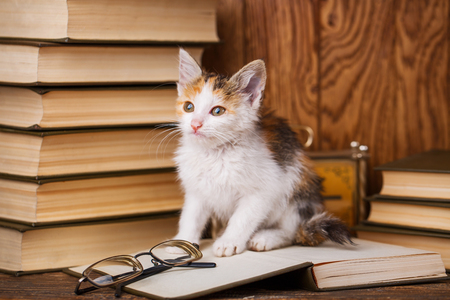 A kitten stands on the book and looks forward