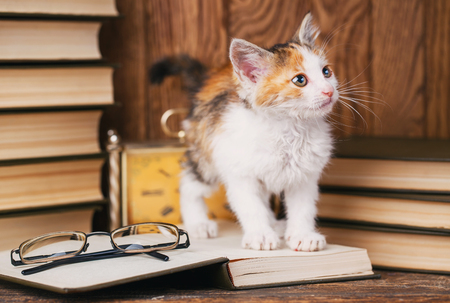 The cat stands on the book and looks to the right side
