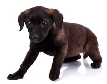 Charming funny puppy on a white background