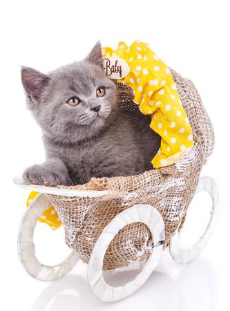 Scottish straight kitten. Isolated on a white background. A funny, fluffy kitten listens attentively Standard-Bild
