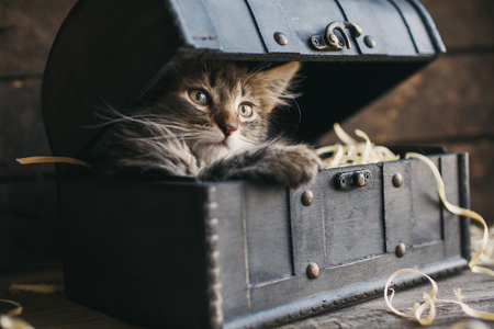 A small, fluffy kitten lying in a box with sawdust.