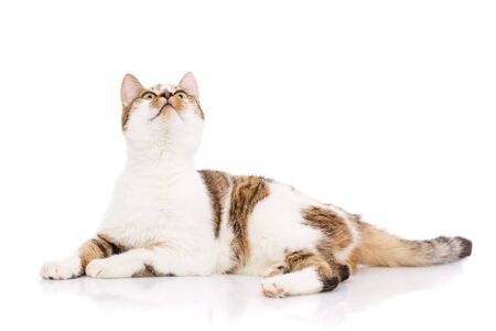 Cat, pet, and cute concept - kitten on a white background. Cat poster