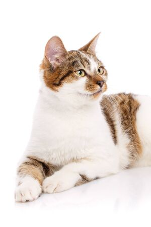 Portrait of a cat on a white background looks sideways