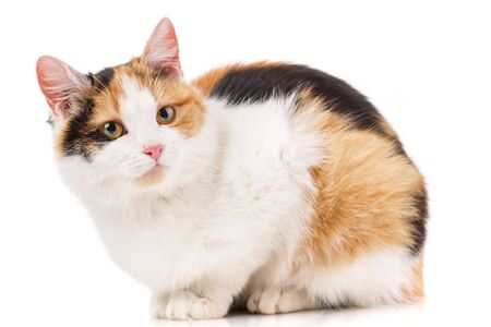 Cat, pet, and cute concept - cat on a white background. Cat poster