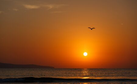 Beautiful sunset over the ocean. Sunset in the sea. Silhouettes of birds. Stockfoto