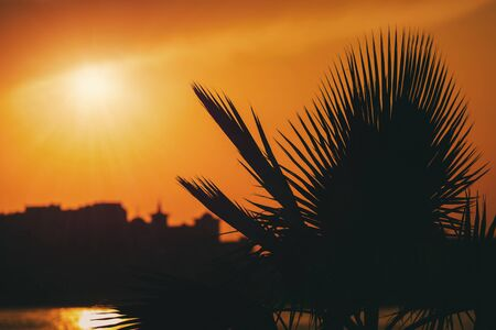 Palm trees silhouette on sunset tropical beach. Tropical landscape. Sunset on the beach. Evening sea