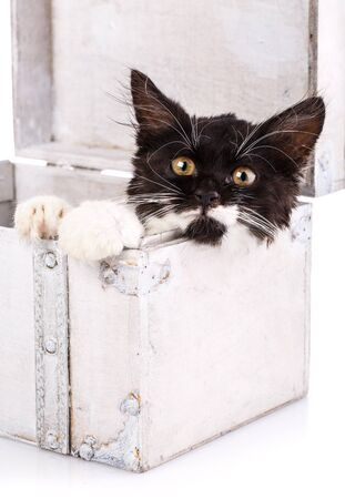 Black and white kitten lies in a white suitcase. Black cat with white paws and whiskers is looking at the camera. Isolated on a white background