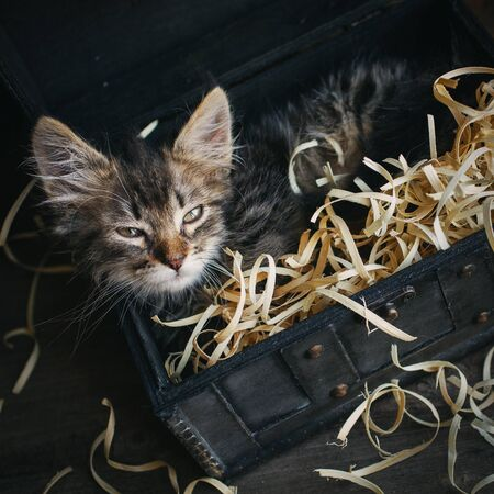 A small, fluffy kitten lying in a box with sawdust. Top view