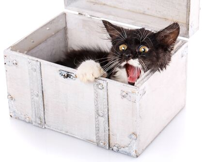 A playful kitty hides in a white box. The cat yawns. Isolated on a white background