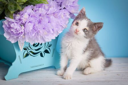 A cat stands next to a decorative box with flowers. Little fluffy kitten at the studio