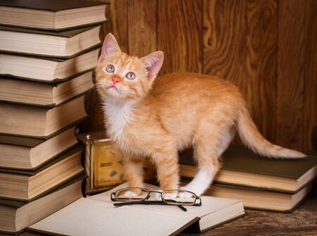 Cat standing on open book and looking up. Inquisitive kitten on book shelf. Open book ready for reading. Zdjęcie Seryjne