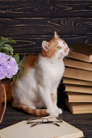 A cat in the library reads a book. The cat is sitting next to an open book