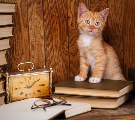 The Playful cat stands at the open book with the glasses. A cat on a wooden bookcase