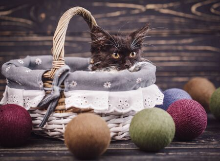 Kitty in the basket. The cat looks at the balls