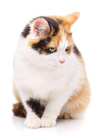 Cat is isolated on white. Pet. A true friend. Cute kitty Zdjęcie Seryjne - 128807727