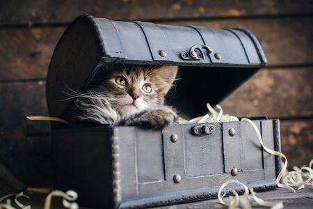 Playful gray kitten in a box. The kittys foot on the box Stockfoto