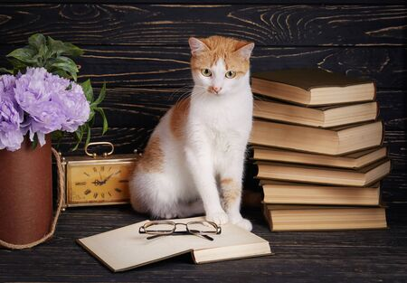 Pussy looks in book. A cat in the library reads a book. The cat is sitting next to an open book Stockfoto