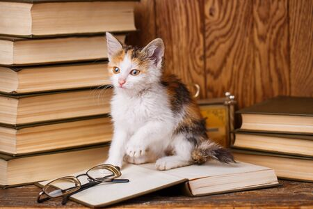 A kitten sits on a book and plays. The book lays glasses. A playful cat on the background of books Stock Photo