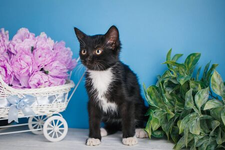 The cat is sitting next to the scenery. Black and white kitten looks to the left. The cat is sitting beside a decorative carriage with flowers