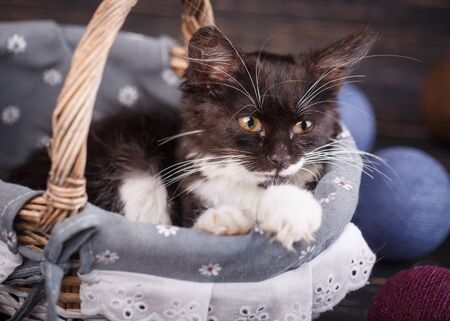 A cat in a basket looks at the right, against the background of colored balls Reklamní fotografie