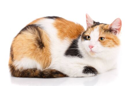 Portrait of a homeless cat. Cat without breed. The unfortunate cat needs help. On a white background Stock Photo
