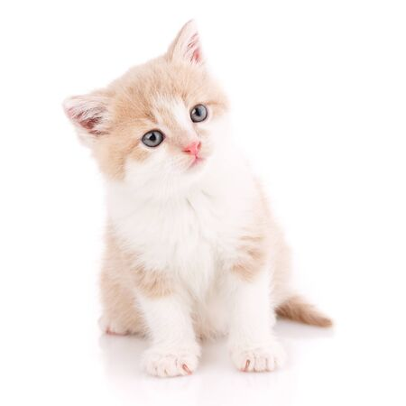 Portrait of a interestin cat, closeup, isolated on white background