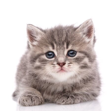 Happy kitten looking at camera. Isolated on white background