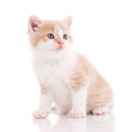 Sweet domestic cat portrait on a white background. Stock fotó