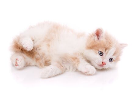 A little cute kitty lying on her back. Funny creepy kitten on a white background