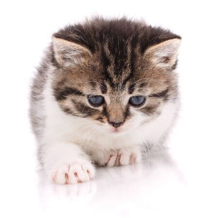 Cute striped kitten with blue eyes on a white background