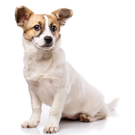 Funny puppy sits sideways. Isolated on a white background. Poster for hotels for animals