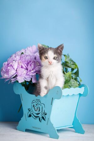 A kitten is played with bright feathers. A small, white kitten with gray spots. A blue basket with flowers on a white table Stock fotó