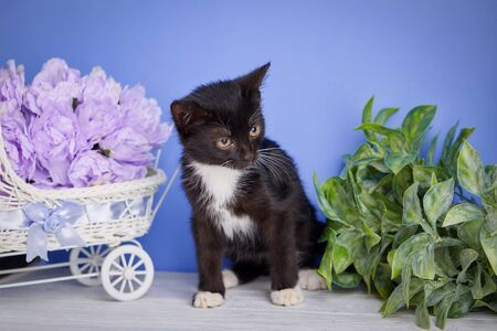 A playful kitten looks right. A beautiful kitty with decorations. A cat is standing beside a decorative cradle with flowers Stock fotó