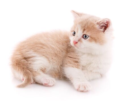 Cat is isolated on white. Pet. A true friend. Cute kitty
