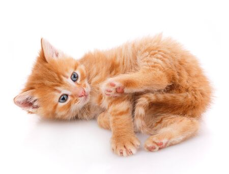 Fluffy red cat lying on the back on white background