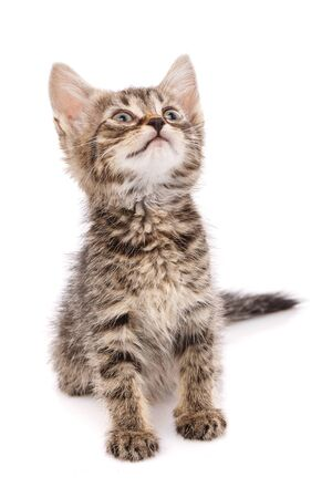A small playful striped gray kitty looks up isolated on a white background. Stock fotó