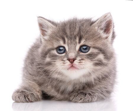 Kitten looking at camera. Isolated on white background Stock fotó