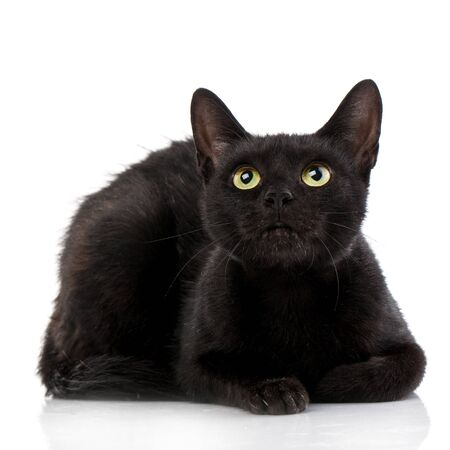 Black cat lying and looking up. Shooting in studio. Isolated Stock fotó