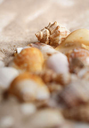 Marine elements closeup. Seashells and starfish on sand. Selective focus.