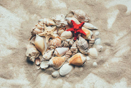 Seashells summer background. Lots of different seashells piled together on a white wooden background. Flat lay, top view 스톡 콘텐츠 - 151620570