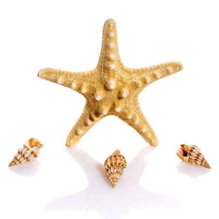 Seashell collection isolated on the white background. Starfish and small spiral shells. Clouse up.