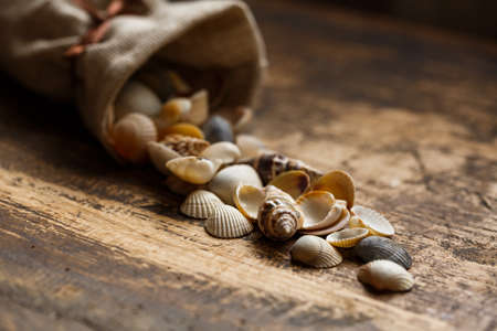 Sea shells on wooden background. Vintage photo with an atmosphere of exploration and treasure hunt.