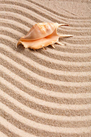 Seashells. Background with free place for your text. Summer, sand and coast. 스톡 콘텐츠