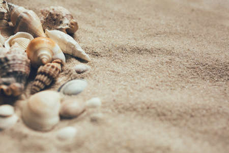 Closeup of beach sand with lots of sea shells. Close up. Place for text. 스톡 콘텐츠
