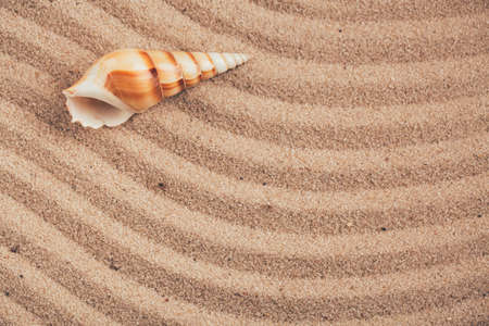 Long seashell lie on the dunes. With place for design, text place. Top view.