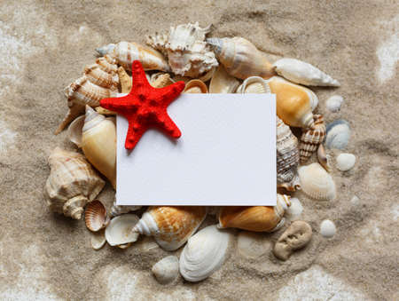 Many shells and red starfish are lying on the sand. Blank white blank with place for text. Souvenirs for travel, travel, leisure. Marine cruise theme. Top view. Sea, sand, beach.