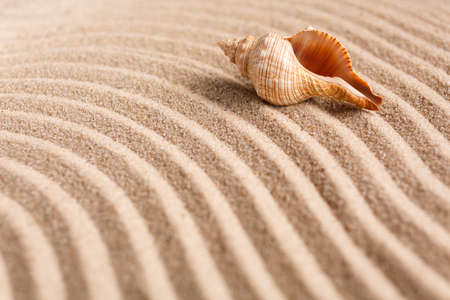 Seashell on the yellow sand on a sunny day. Natural background with place for your text. Selective focus. 스톡 콘텐츠