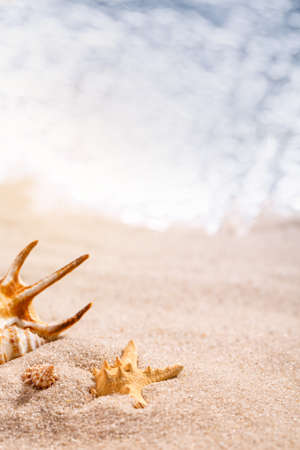 Beautiful seashells lie in the sand on a sunny beach. Blurred sea in the background. Vacation, sea, travel concept. Place for text, close up. 스톡 콘텐츠