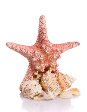 Starfish and different seashells on a white background. Close up. Holiday concept.